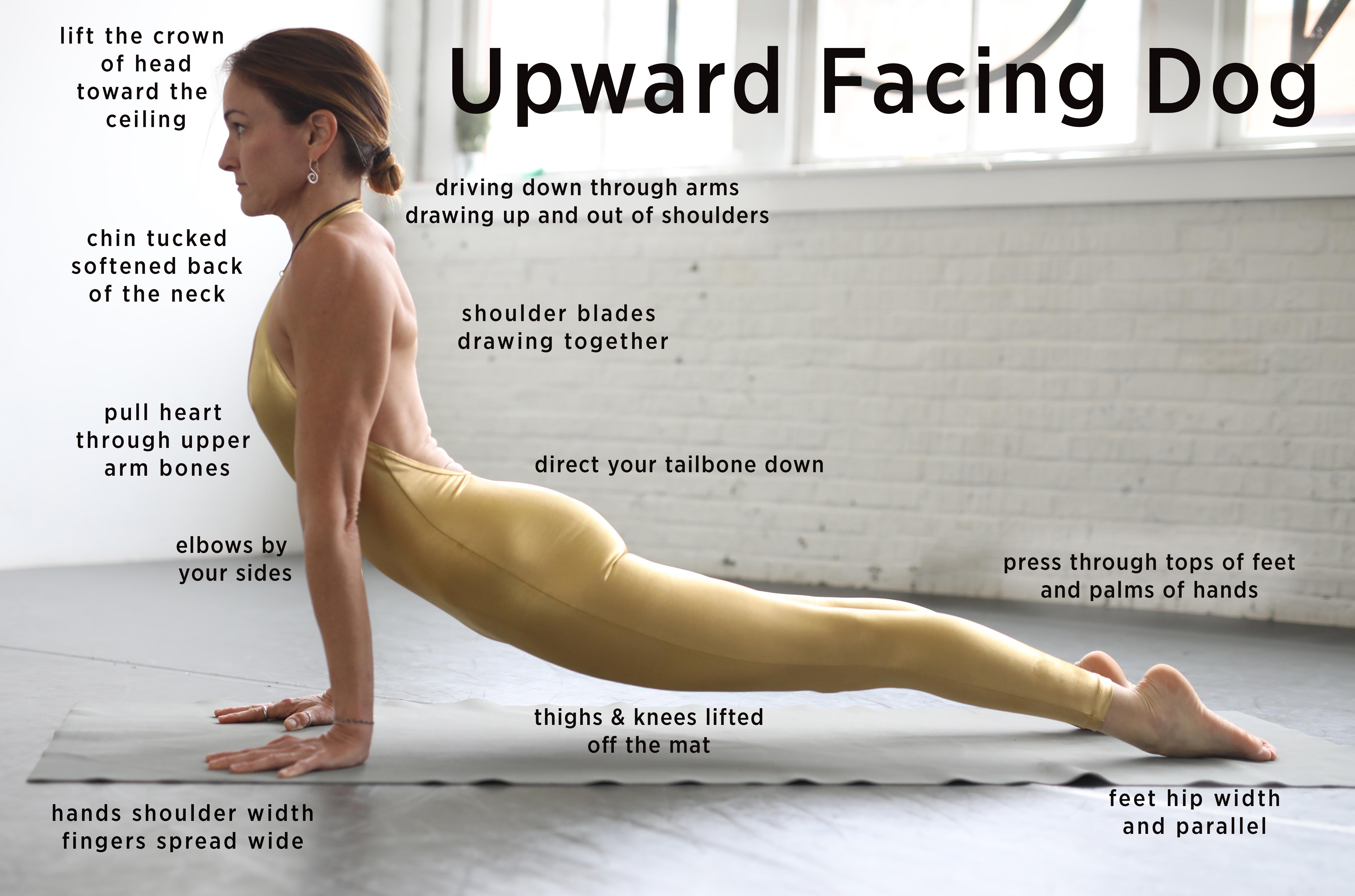Debby Siegel demonstrates yoga pose - upward facing dog