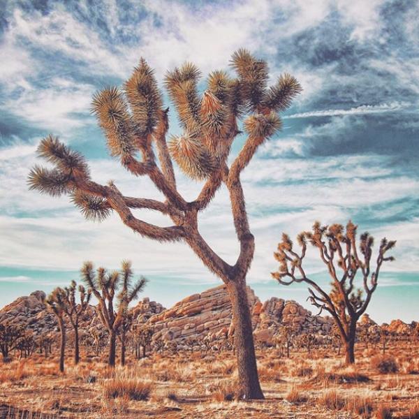 Joshua Tree California Yoga Retreat
